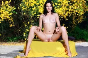 Lika - Amber